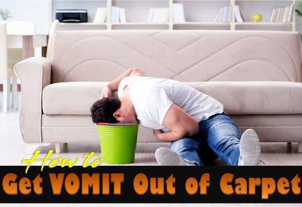 get vomit out of carpet