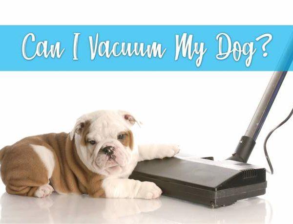 vacuuming a dog