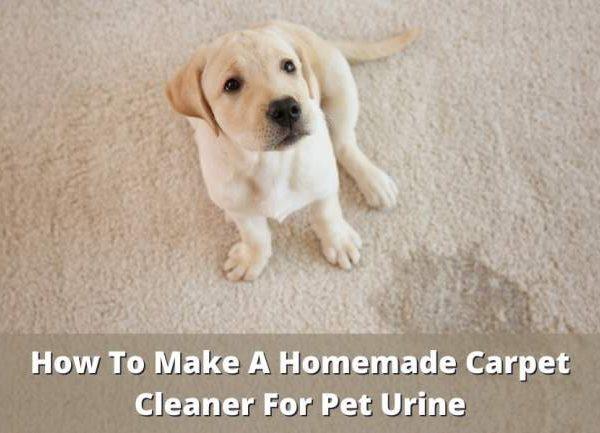 homemade carpet cleaner for pet urine