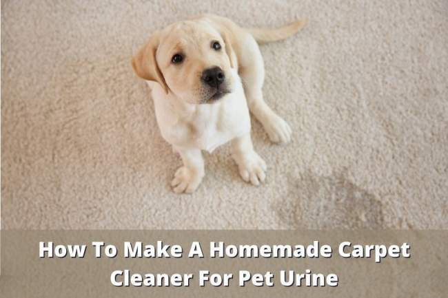 homemade carpet cleaner for pet urine
