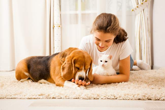 homemade carpet cleaner for pets