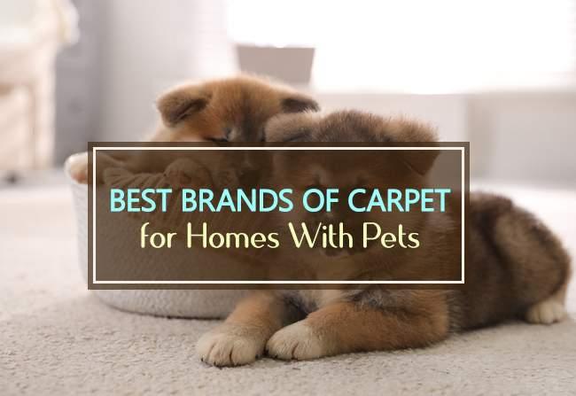 best brands of carpet