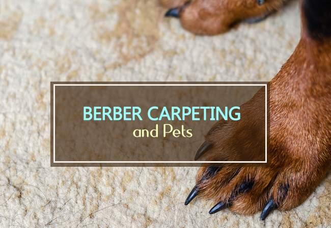 berber carpet and pets
