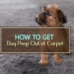 How to Get Dog Poop Out of Carpet [Quick and Easy!]