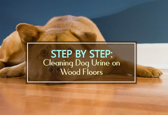 step by step cleaning dog urine on hardwood floors