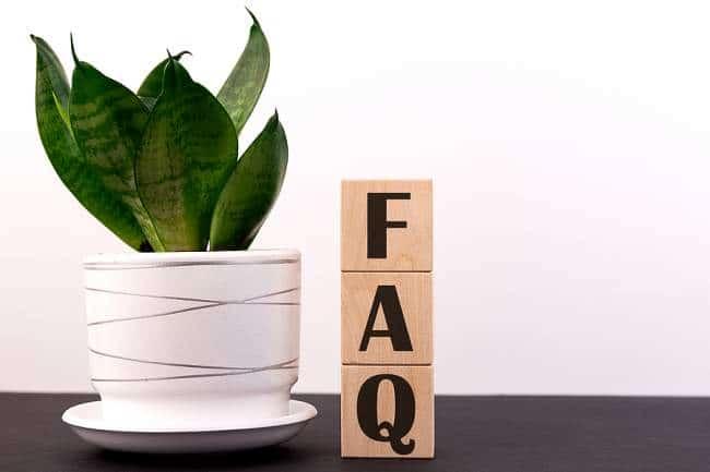 faq use pine-sol on hardwood floors